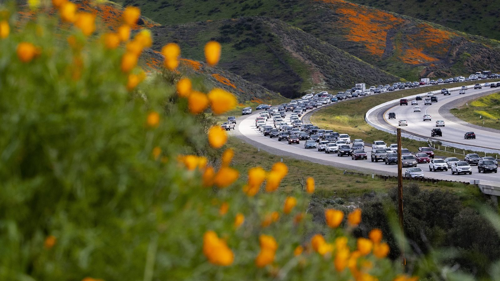 Traffic and poppies in California